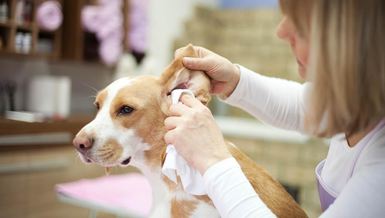 Dog check up