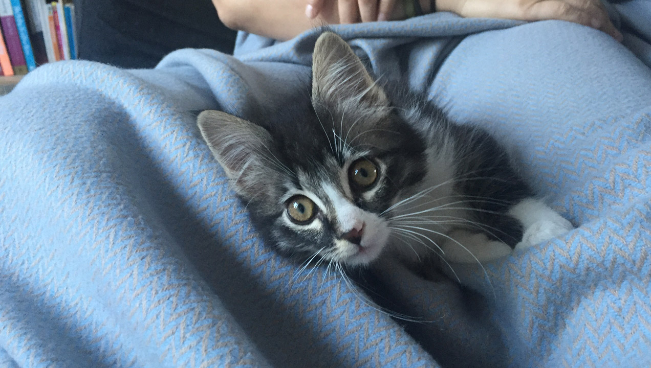 Cute kitten in blanket