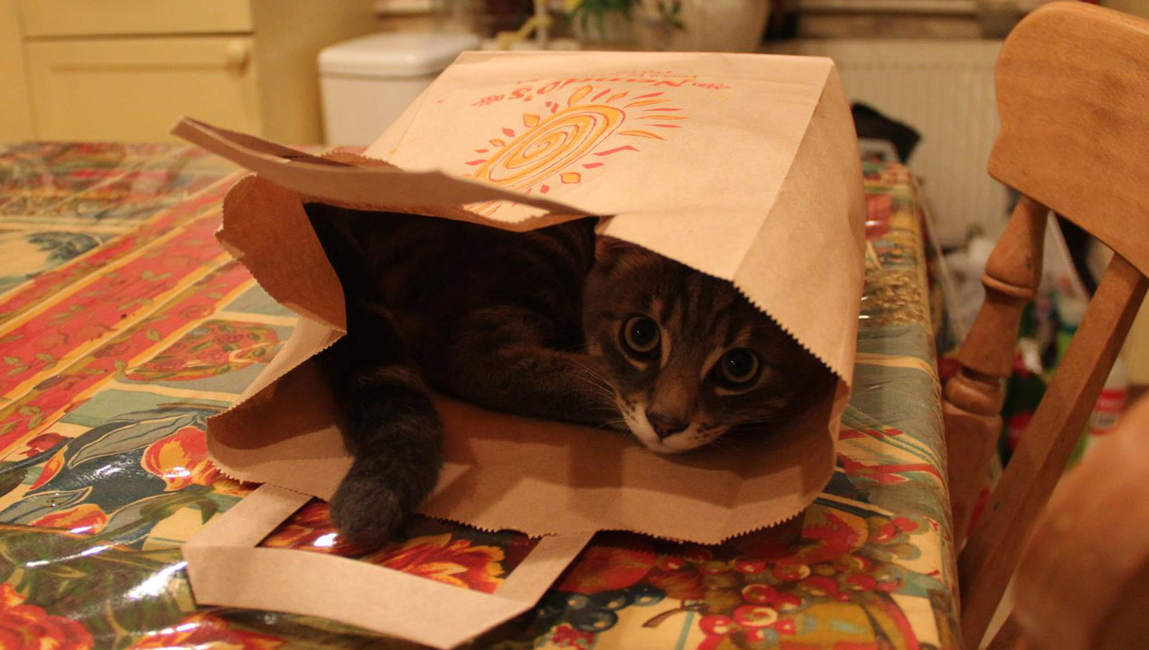 Pablo the cat hiding in a brown bag