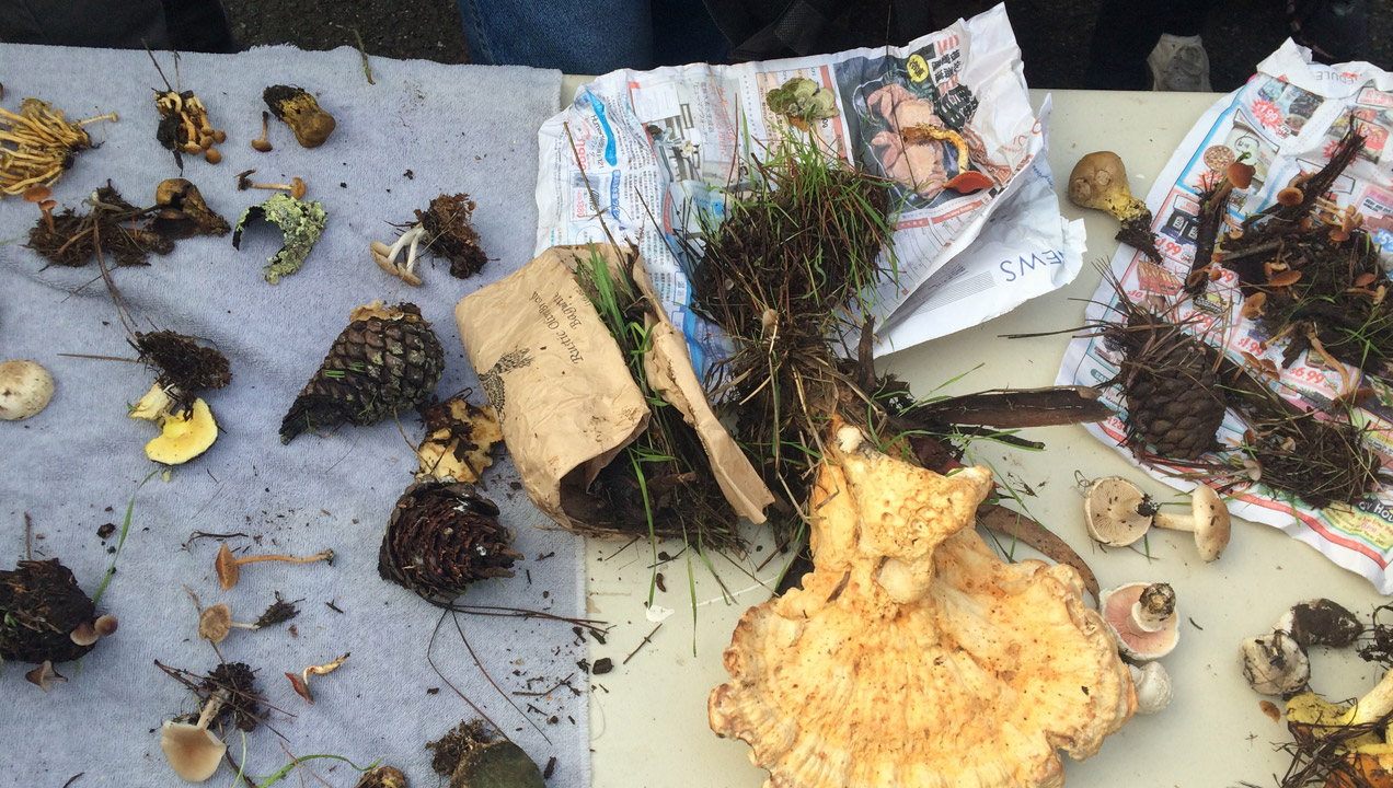 Shauna's items she picked up whilst foraging.
