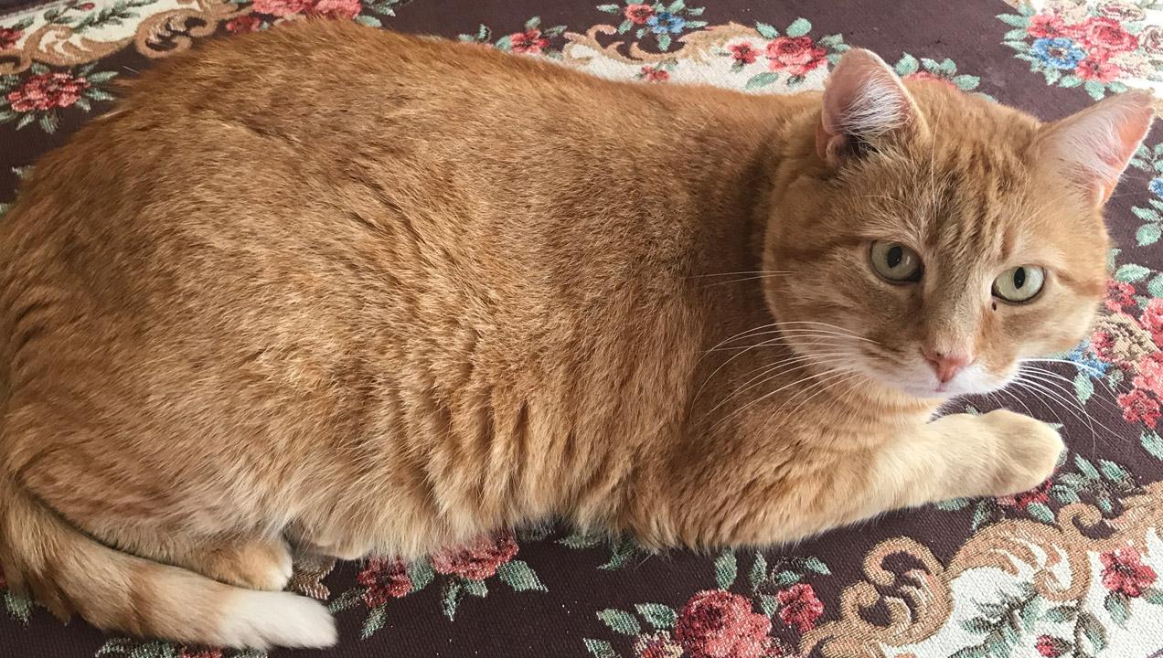 Azia's ginger cat